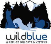 Wild Blue Cats – A Refuge For Cats & Kittens